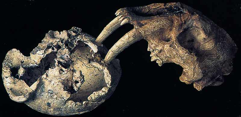 The dmanisi fossils were dating using 2