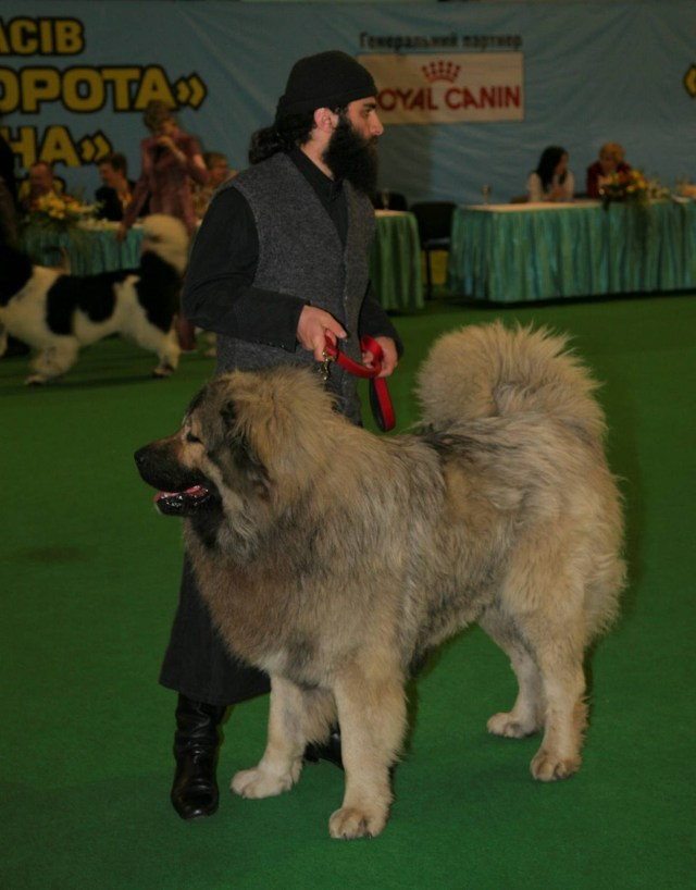 "Butkuna Tabakini - 'Best in Show' at the International Dog-show ""Golden Gate 2010"", Kiev, Ukraine"
