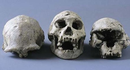 Skulls of Early Humans found at Dmanisi in Georgia