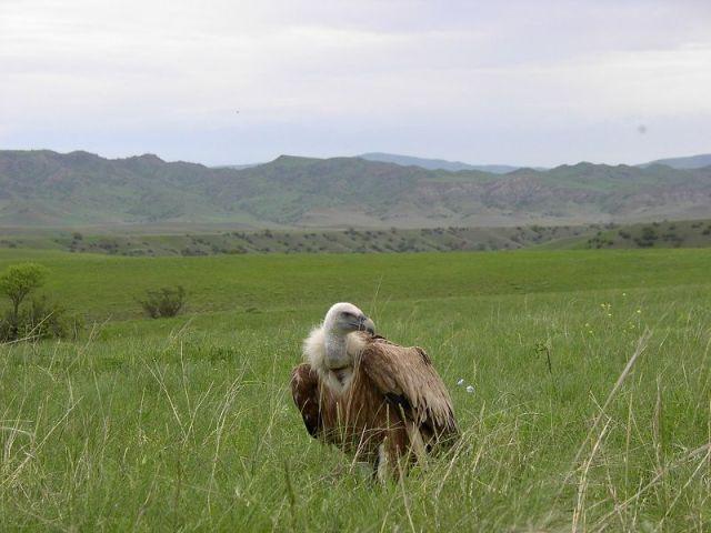 vashlovani bird of prey