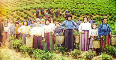 A Tea Plantation in Georgia in the early 1900s - picture by Sergeii Mikhailovich Prokudin-Gorskii