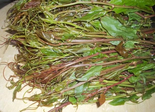 Ekala Plant