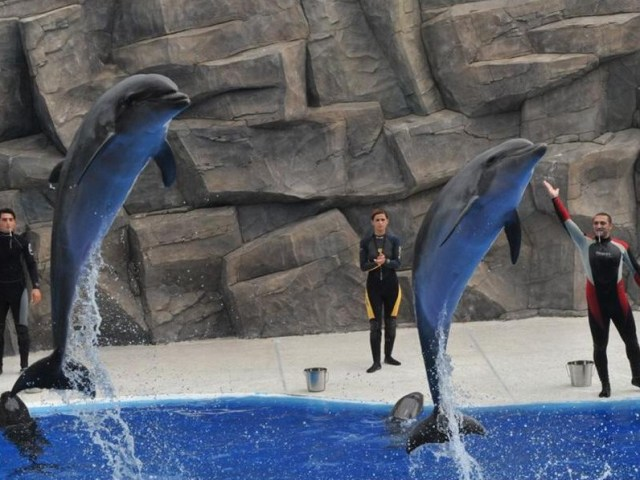 Bottlenose Dolphins at Batumi Dolphinarium. Photo courtesy of 6 May Park
