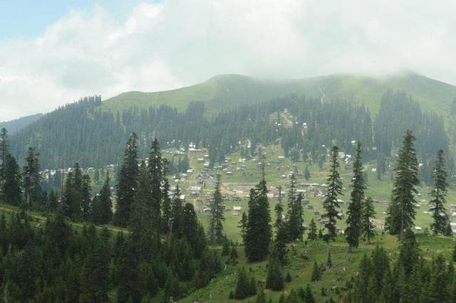 Coniferous Forest in Bakhmaro