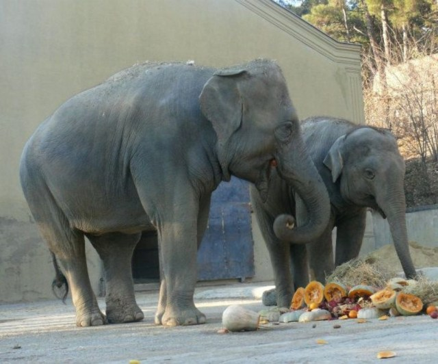 Elephants at Tbilisi Zoo