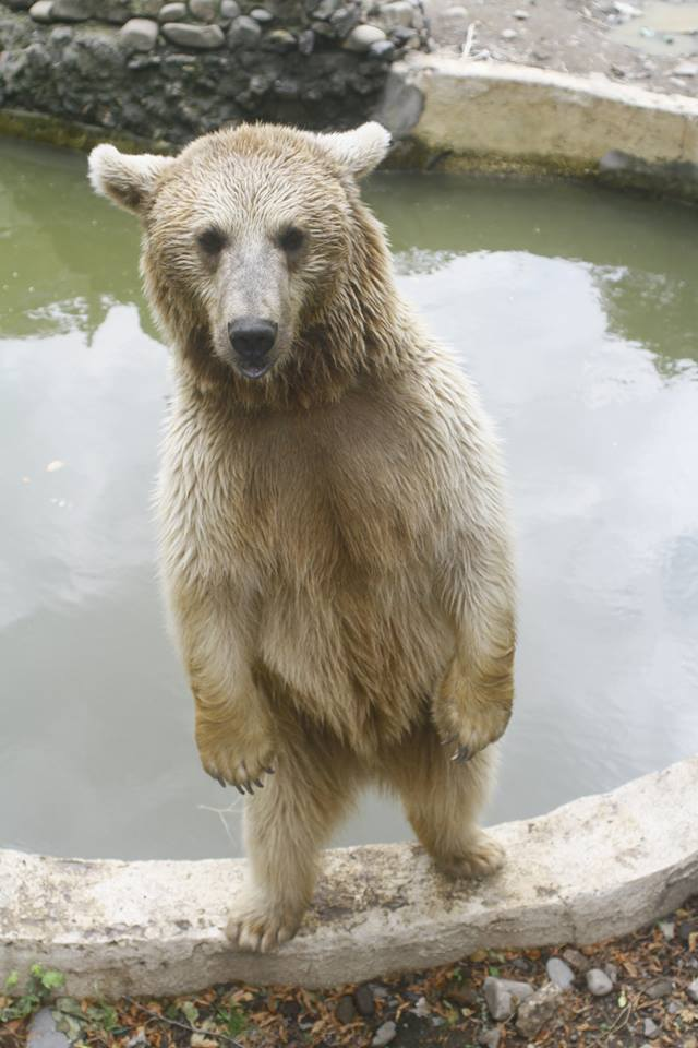 See me at Tbilisi Zoo!