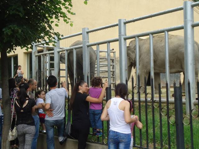 The Elephant Enclosure at Tbilisi Zoo