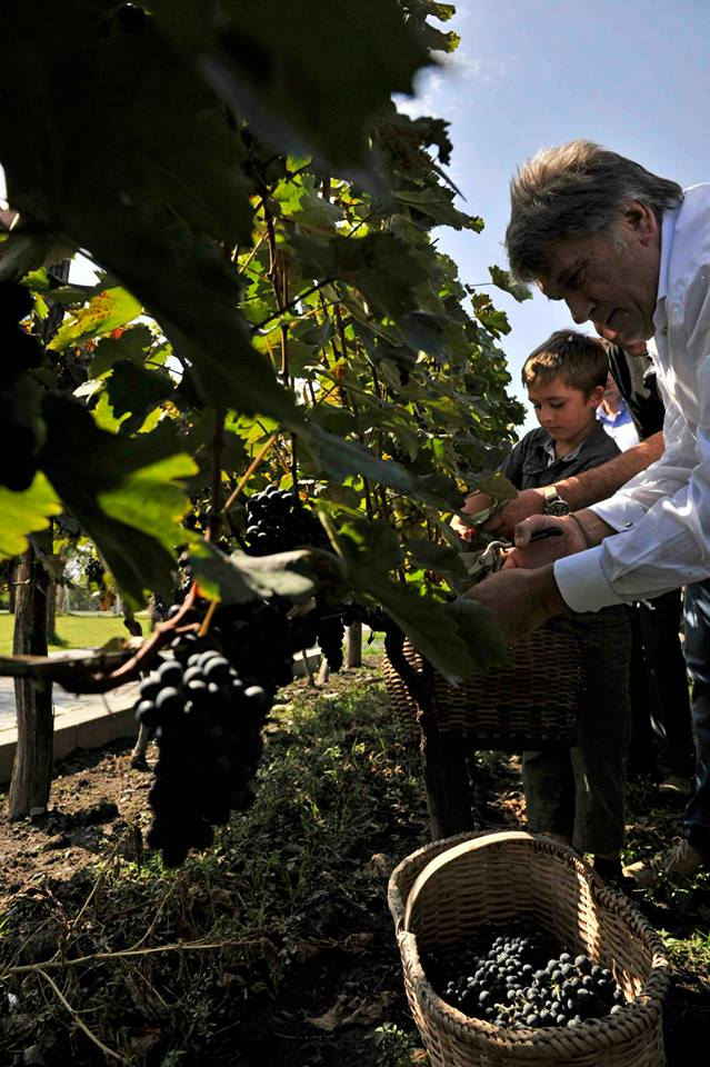 The Ex-President of Ukraine, Viktor Yushchenko, helped with the grape harvest