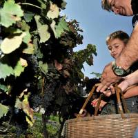 About Celebrations - The Grape Harvest