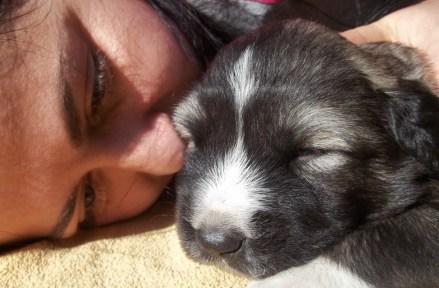Bassa's Caucasian Shepherd Puppies_3