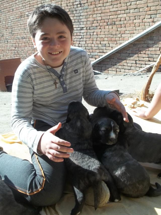 19 day old Caucasian Shepherd puppies