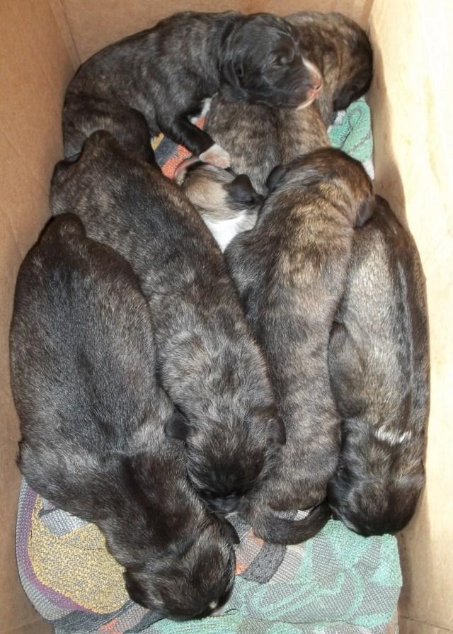 Bassa's Puppies