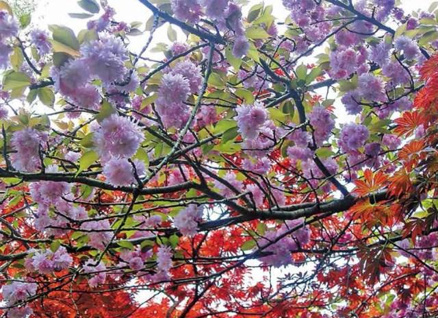 Batumi Botanical Garden. Photo courtesy of Batumi Botanical Garden_11