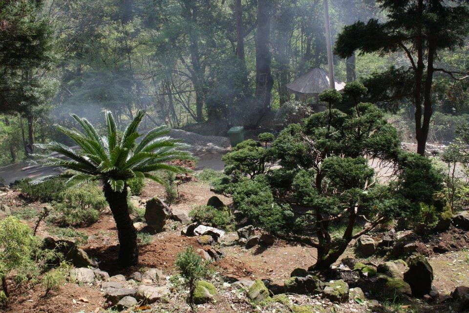 About Sights Batumi Botanical Garden Georgia About