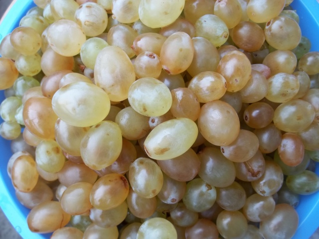 Washed Grapes for Badagi Recipe