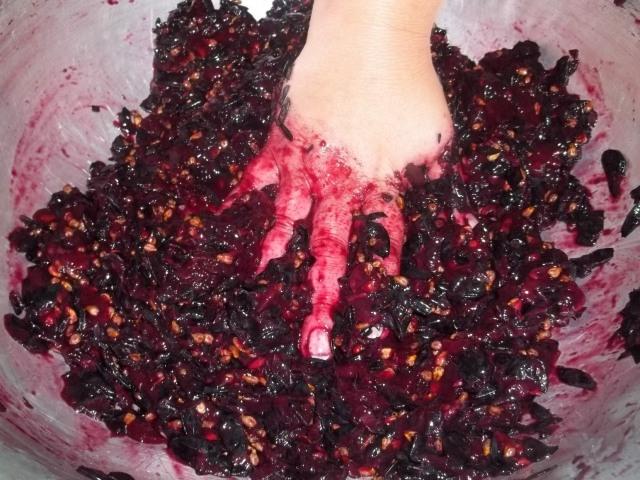 Using a Colander to crush grapes