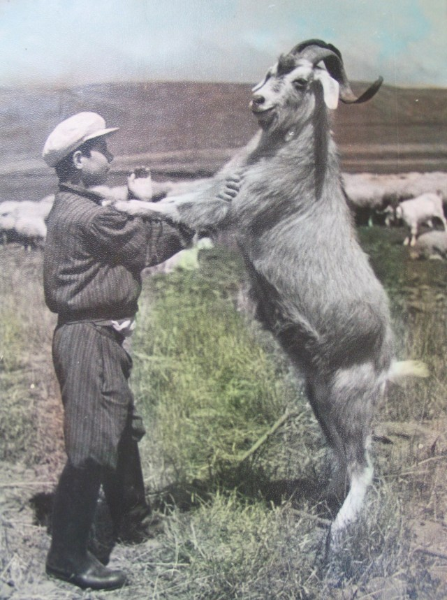 A boy and his goat in 1950's Georgia