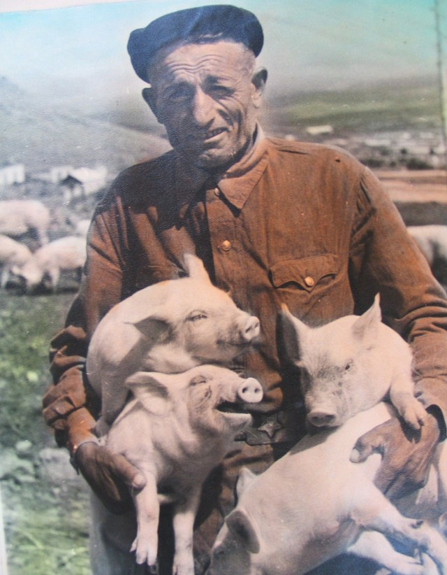 A Farmer and his Pigs in 1950's Georgia