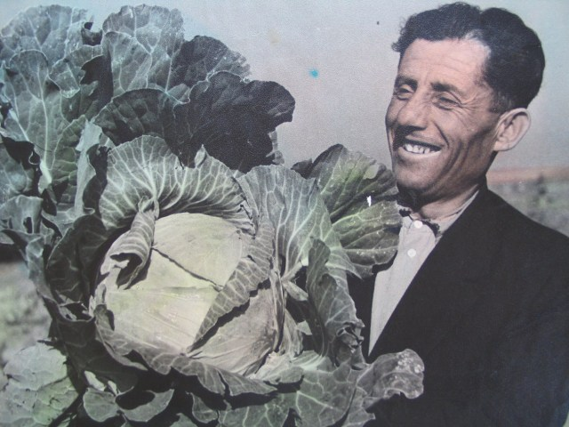 Farmer with Giant Cabbage in 1950's Georgia