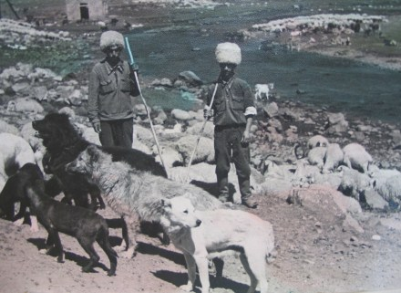 Shepherds in 1950s Georgia - Copy