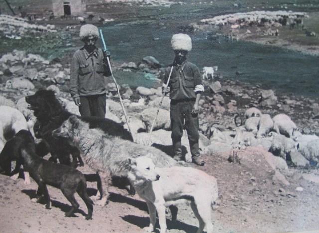 Shepherds in 1950's Georgia