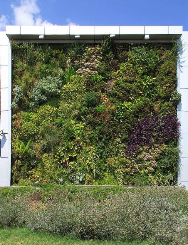 Vertical Garden in Tbilisi