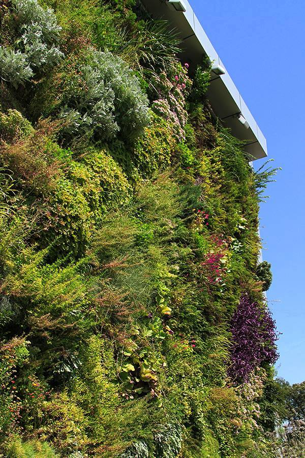 The Vertical Garden in Tbilisi