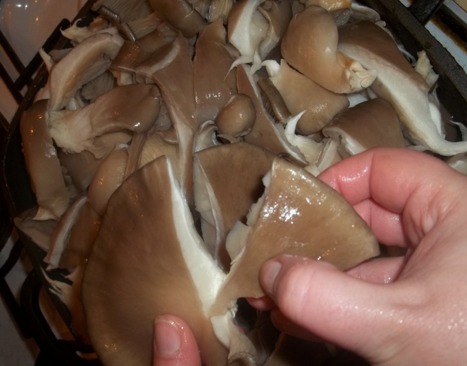 Tearing Mushrooms - Copy