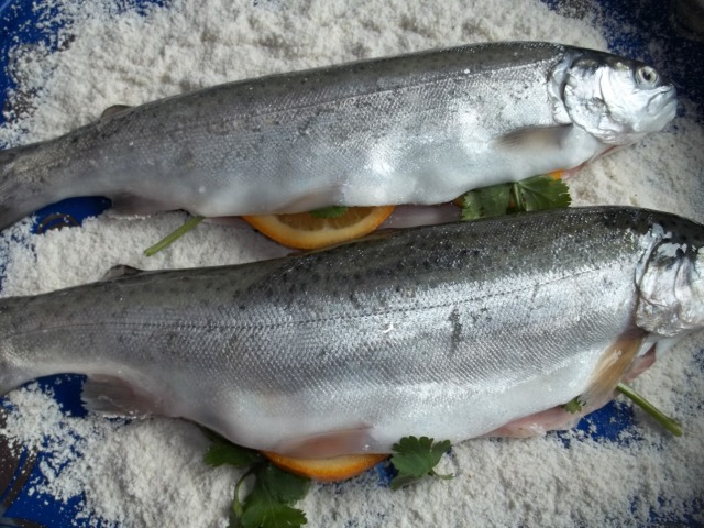Coating the fish with cornmeal - Copy
