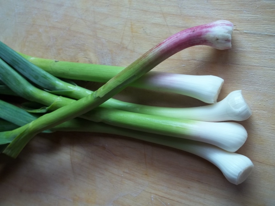 Green Garlic - Copy