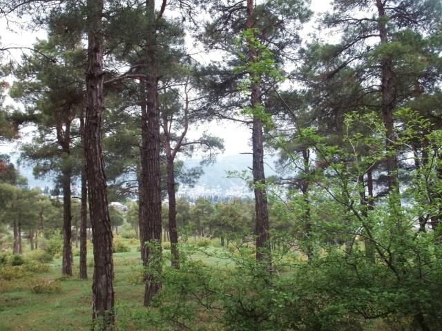 Khudadov Forest
