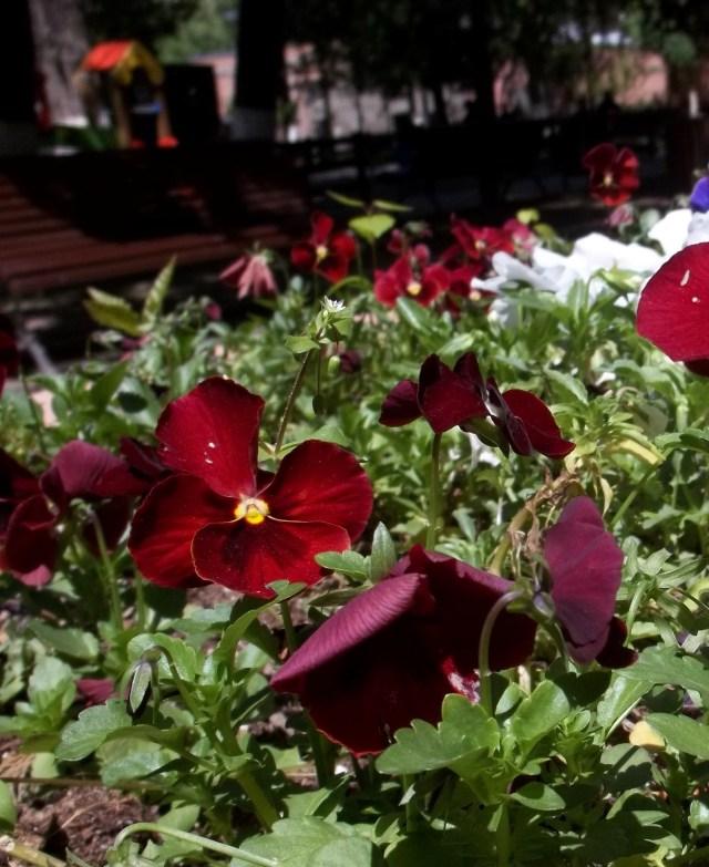 Flowers in Djansug Kakhidze Park