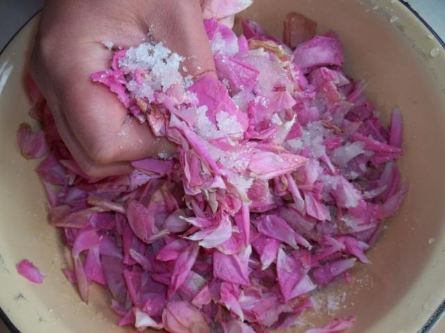 Squeezing Sugar and Petals - Copy