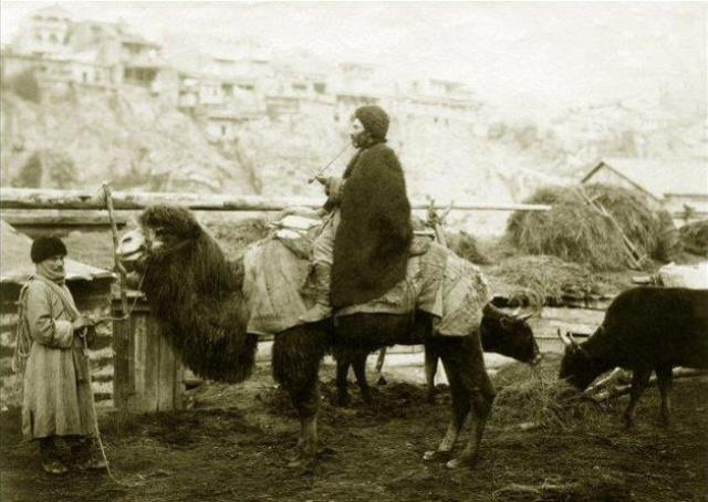 A Camel in 19th Century Tiflis