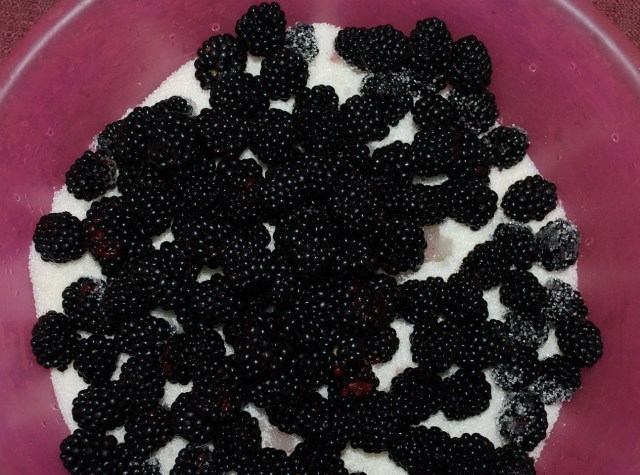 Adding more Blackberries - Copy