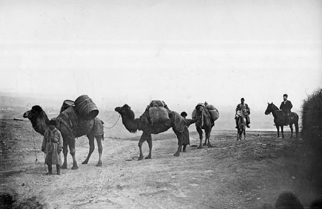 Camel caravan from Persia. Photo by Dimitri Ermakov.