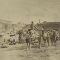 About History - Camels in 19th Century Tiflis