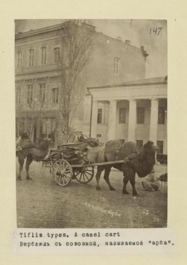 Camel pulling a cart in a Tiflis street.