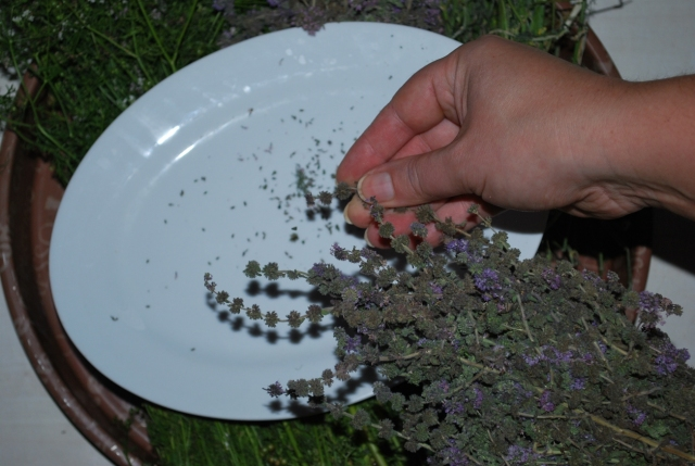 Removing Seeds - Copy