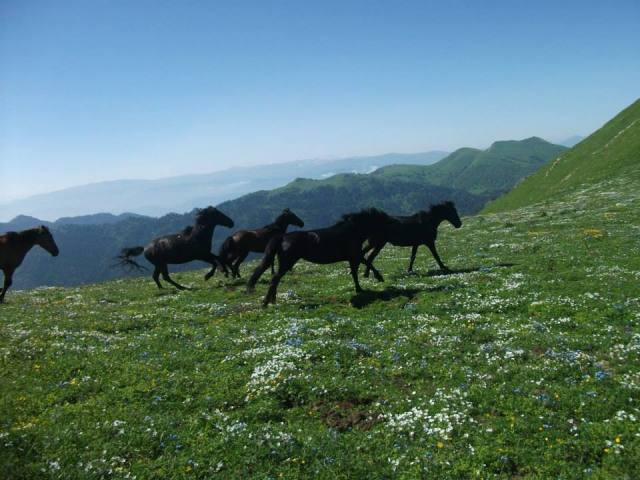 Horses on St. Andrews Trail in the Borjomi-Kharagauli National Park