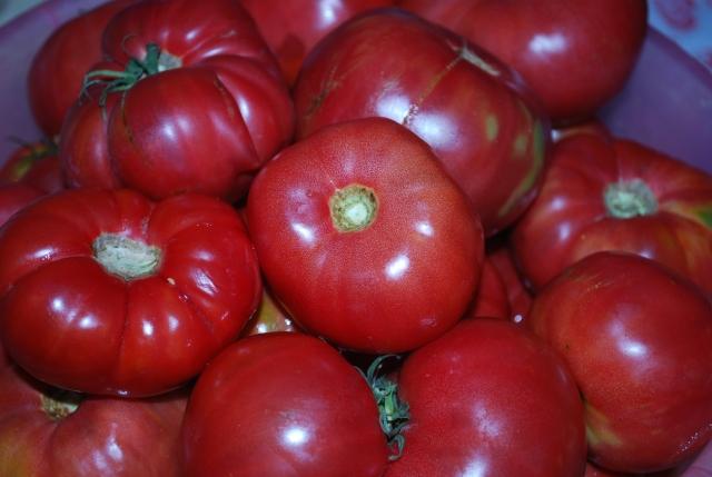 Tomatoes - Copy