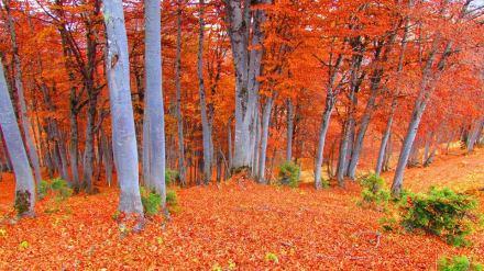 Autumn colors in Bakhmaro. Photo by Levan Sikharulidze.