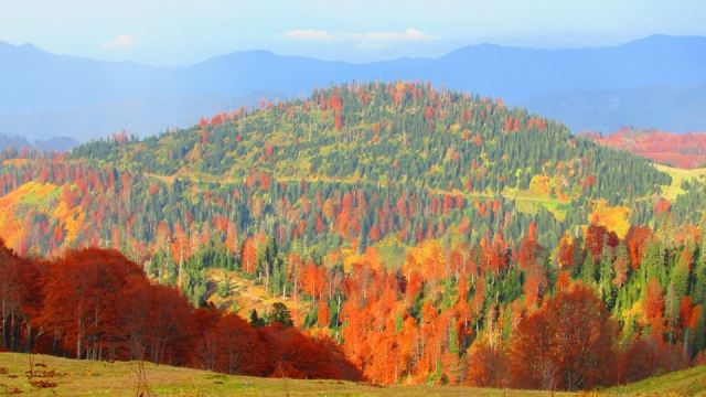 Autumn colors in Bakhmaro. Photo by Levan Sikharulidze