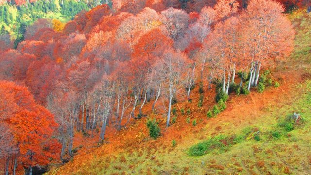 Autumn colors in Bakhmaro. Photo by Levan Sikharulidze.