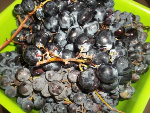 Dark Grapes - Copy