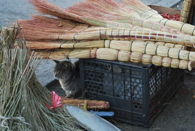 Cat and brushes at the Dezerter Bazaar