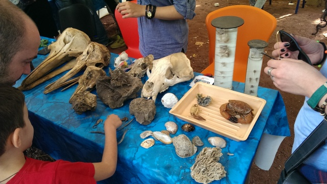 Natural history exhibits at the Scientific Picnic at Vake Park in Tbilisi