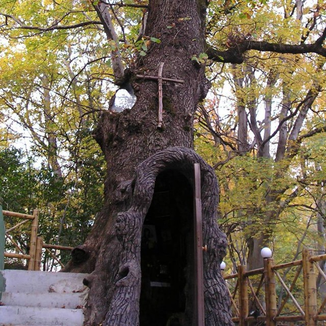The Virgin Mary Chapel in a living oak tree in Kutaisi Botanical Garden.